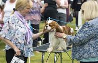 Dog Show (c) Devon County Show Credit: Geoff & Tordis Pagotto