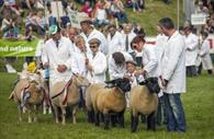 Sheep (c) Devon County Show Credit: Geoff & Tordis Pagotto