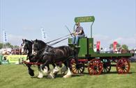 Horses (c) Devon County Show Credit: Geoff & Tordis Pagotto