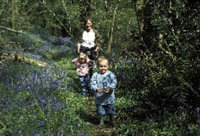 Family in Holyford Woods - DD