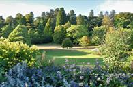 Flowers and trees in Killerton Gardens
