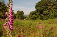 Killerton Gardens with flowers