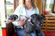 Dogs on Seaton Tramway