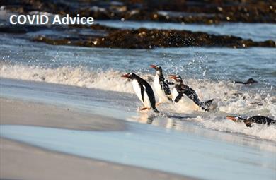 Thumbnail for COVID-19 Advice