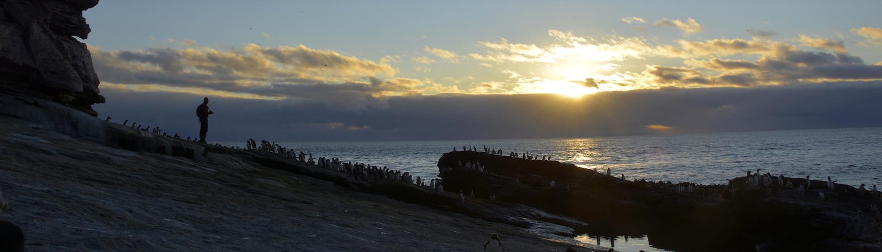 Rockhoppers enjoying the sunset on the Falkland Islands