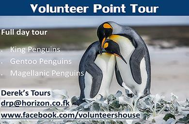 Falkland Islands - Volunteer Point - Derek's Tours