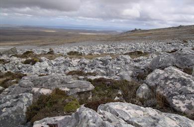 Thumbnail for East Falkland