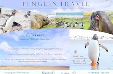Thumbnail for Kelp Point Tour