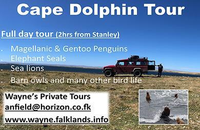 Cape Dolphin Tour - Wayne's Private Tours - Falkland Islands