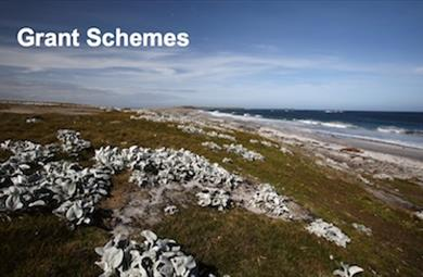 Thumbnail for Grant Schemes