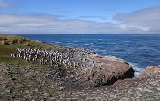 Seascapes and bird colonies on the Falklands