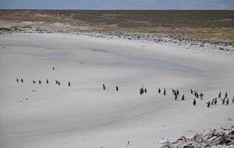 Elephant Beach_East Falklands_Falkland Islands