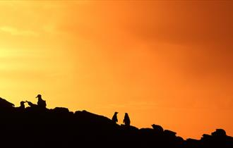 Glorious sunsets in the Falkland Islands