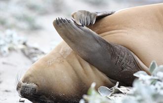 Sea lion basking on the beach