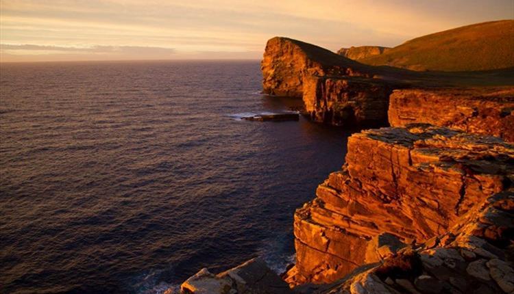 New Island_Falkland Islands