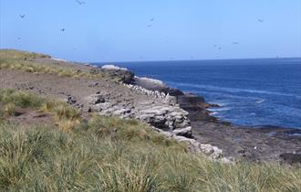 The rugged coastline of the Falkland Islands is home to a huge range of amazing wildlife