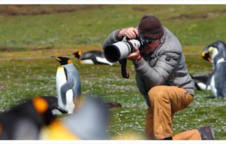 Photographing King Penguins in the Falkland Islands is an unmissable experience.