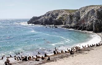 Seal Bay_East Falklands
