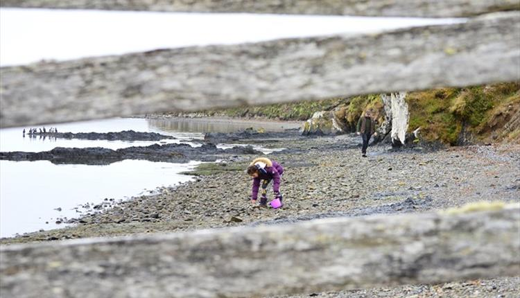Falkland Islands_fossil hunting