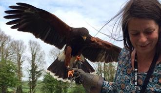 The Bird Lady of Fowey