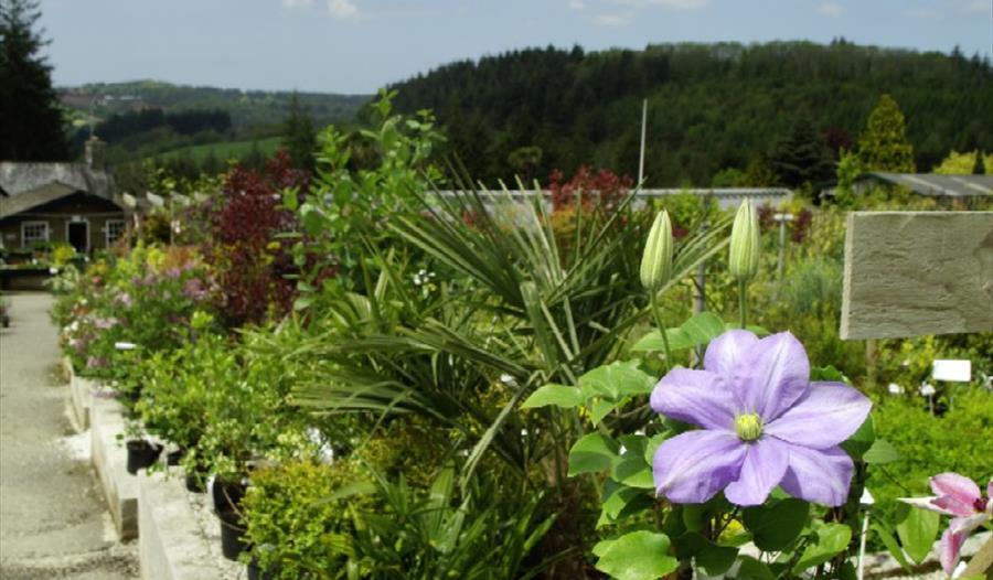 Duchy of Cornwall Nursery, Lostwithiel