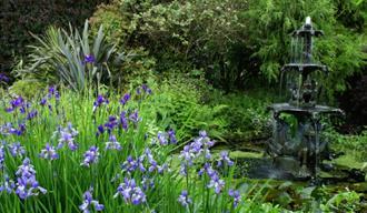 Pine Lodge Gardens & Nursery, St Austell, Cornwall