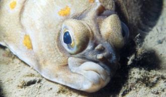 Fowey Aquarium