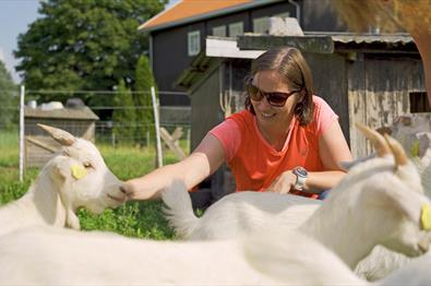Stokke Nedre - Guest greeting the goats