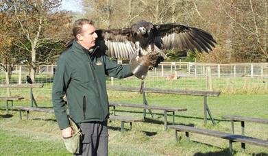 Bird of Prey Experience at The Lake District Wildlife Park