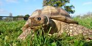 Tortoise @ The Lake District Wildlife Park