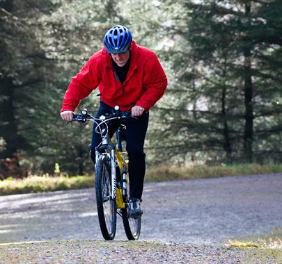 Grizedale Forest and Parkamoor