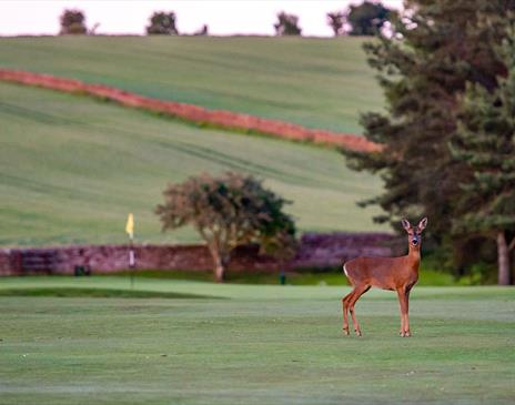 Golf Lake District Stag