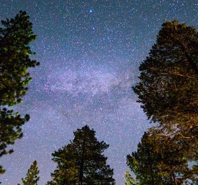 Nature's nightlife at Whinlatter