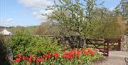 Garden, Rose Cottage