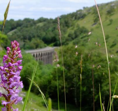 Smardale Nature Reserve