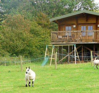 Springbank Farm Lodges