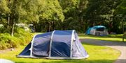 Tent Camping at Coniston Park Coppice Site