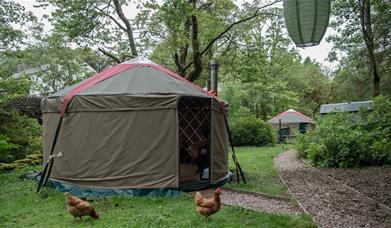 Glamping yurts at The Black Swan