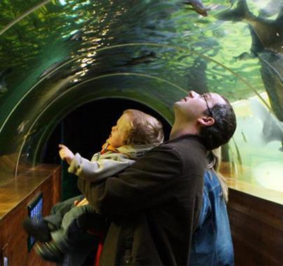 Lakes Aquarium underwater tunnel