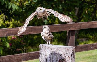 Muncaster Castle Hawk & Owl Centre