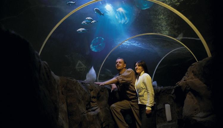 SeaQuarium