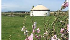 Anglesey Yurt Holidays