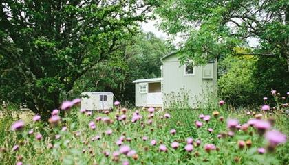 Snowdonia Shepherds' Huts in wildflower meadow, near Betws-y-Coed, North Wales
