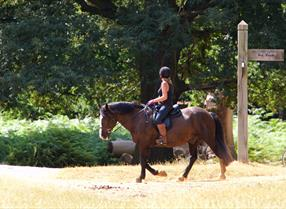 Woman riding horse through parkland