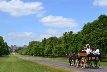 Carriage rides in Windsor Great Park