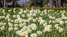 Spring flowers at Bowood