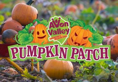 Pumpkin Patch at Avon Valley Adventure & Wildlife Park