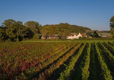 Aldwick Court farm and vineyard