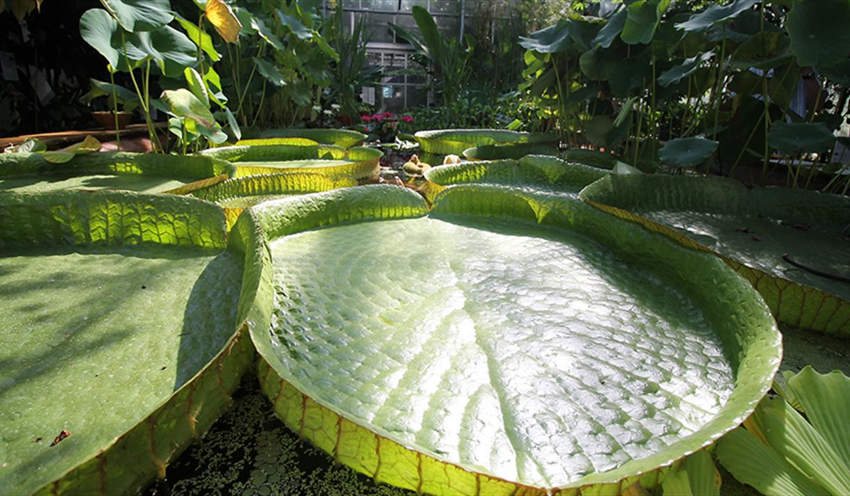 University of Bristol Botanic Garden