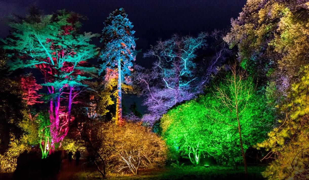 Enchanted Christmas at Westonbirt Arboretum